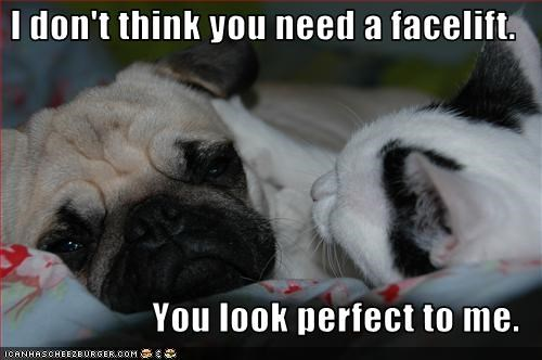 beautiful dating face lolcats love pug