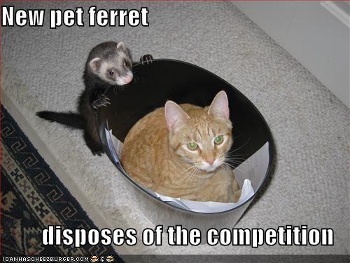 lolferrets,mean,trashcan