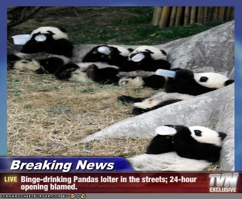 Breaking News - Binge-drinking Pandas loiter in the streets; 24-hour opening blamed.