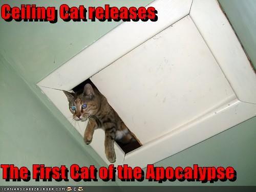 bad news ceiling cat minion - 1730540800