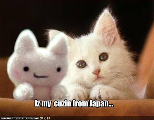 cousin,Japan,kitten,stuffed animal
