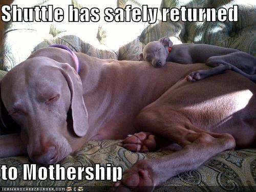 baby,mom,mothership,puppy,shuttle,space,ufo,weimaraner