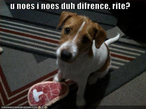 food jack russel terrier rug steak