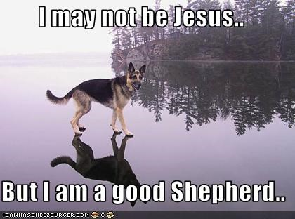 german shepherd outdoors religion walk water