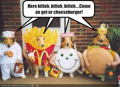 cheezburger,collie,costume,donut,food,halloween,lolcats