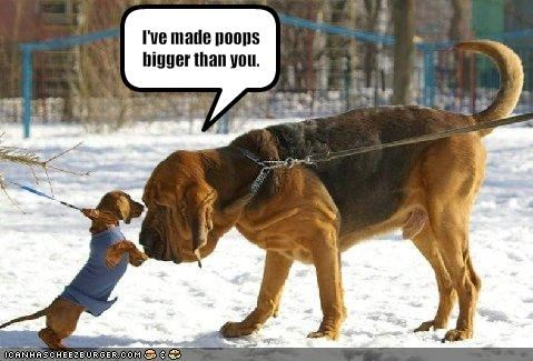 big,bloodhound,dachshund,giant,little,outdoors,poop,snow,tiny