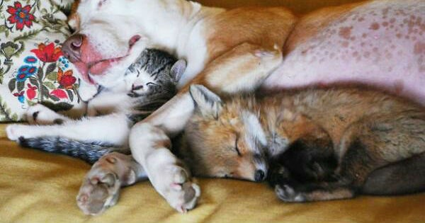 different kinds of animals cuddling