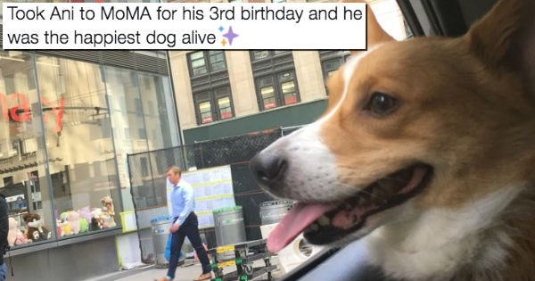 pets birthday corgi new york - 1736197