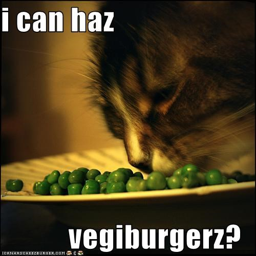 Cheezburger Image 1737174784