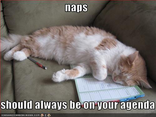 nap rules - 1737448704