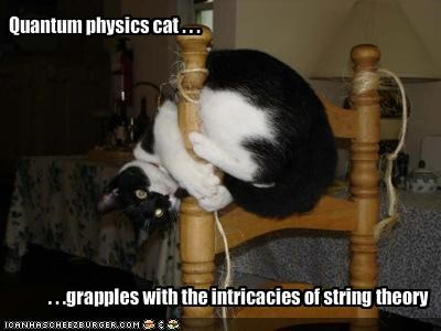 Quantum physics cat . . .