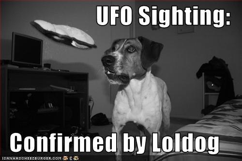 jack russel terrier loldog sandwich ufo - 1738866432