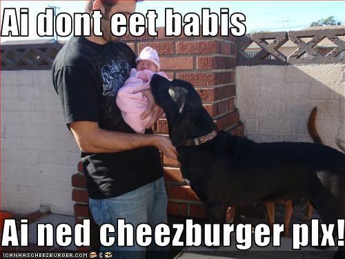 Cheezburger Image 1739487488