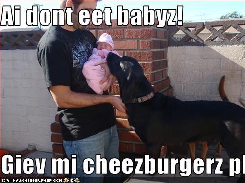 Cheezburger Image 1739491584