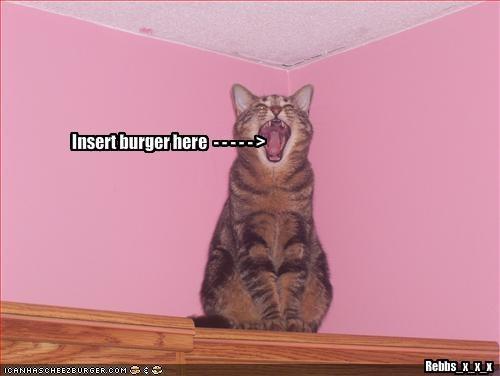 Cheezburger Image 1740940544