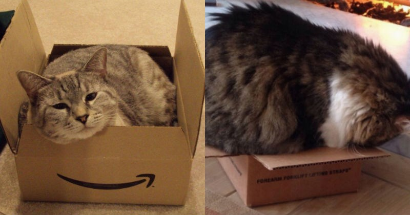 boxes cardboard box Cats - 1742597