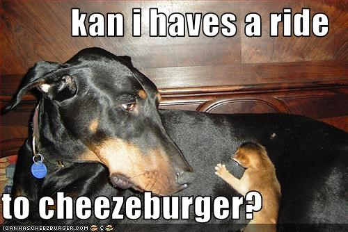 Cheezburger Image 1743030016
