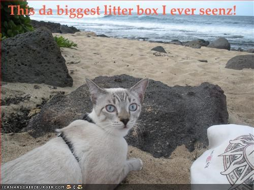 beach,excited,litterbox,outside