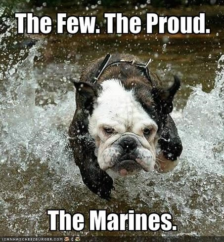 bulldog,marines,military,proud,running,water