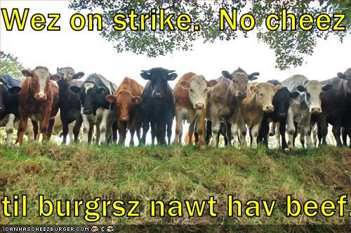 Cheezburger Image 1744876288
