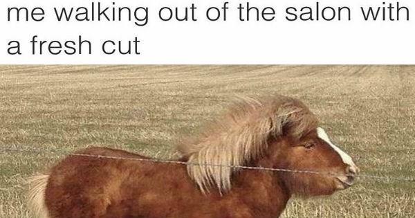pets Memes lol animals - 1745669