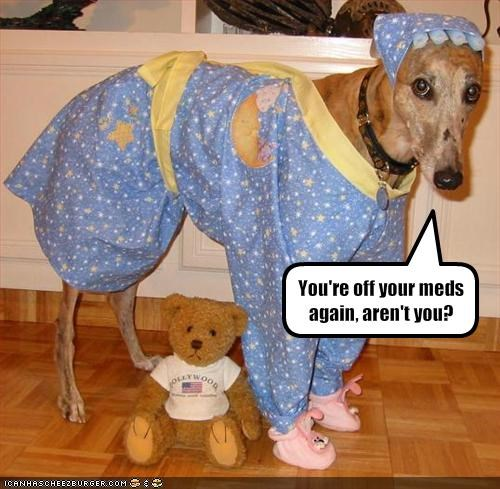 costume,greyhound,human,indoors,medication,stuffed animal
