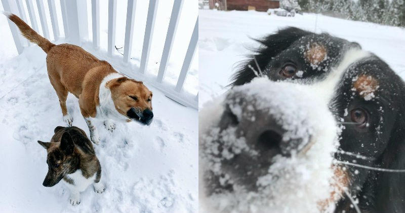 dogs pets snow day snow