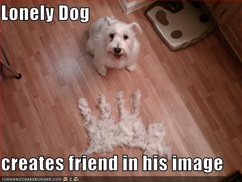 friends furry hair indoors lonely shedding west highland white terrier - 1751483136