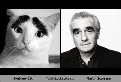 Image result for martin scorsese memes