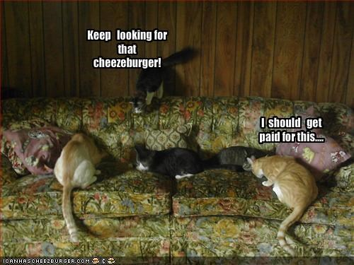 Cheezburger Image 1755643648