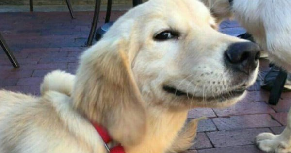 dogs good boy Memes - 1755909