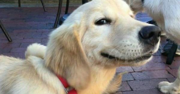doggo dog memes