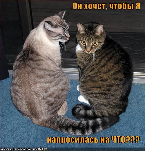 Cheezburger Image 1756071168