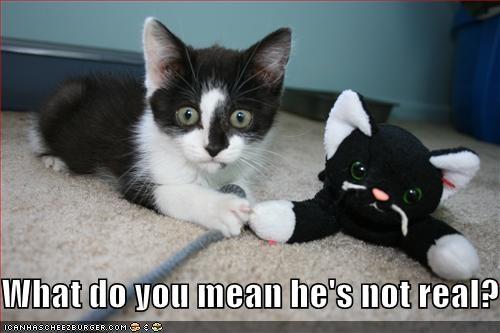 cute kitten shocked stuffed animal - 1756093696
