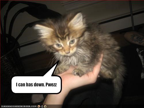 I can has down. Pwezz