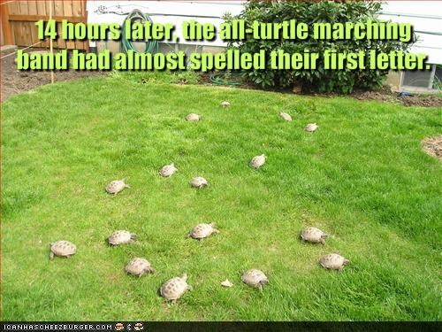 lolturtles,Music,spelling