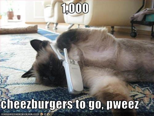 Cheezburger Image 1763407104