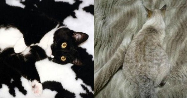 cats camouflaging in their surroundings