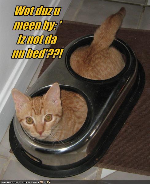Cheezburger Image 1766475008