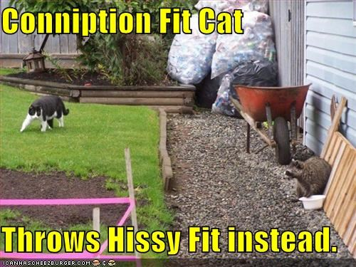Conniption Fit Cat Throws Hissy Fit Instead Cheezburger Funny