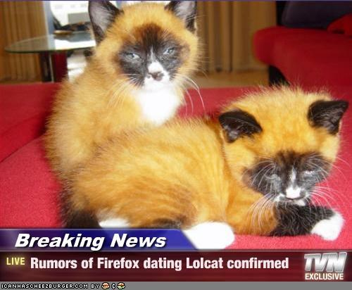 cute,dating,firefox,kitten,news