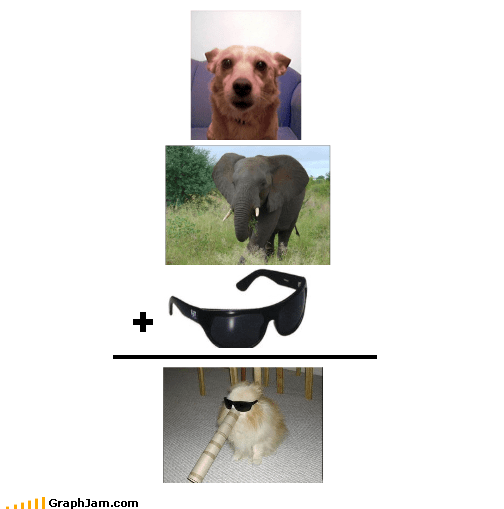 animals dogs elephants sunglasses - 1772460800