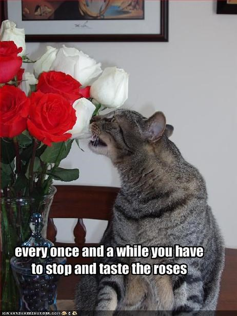eating,flowers,nom nom nom,roses