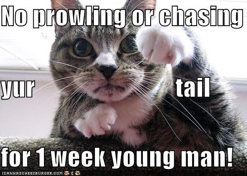 No prowling or chasing yur tail for 1 week young man! - Cheezburger