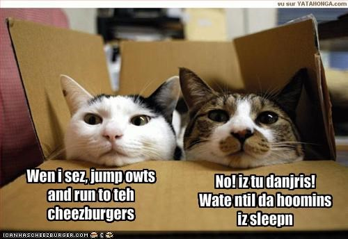 Cheezburger Image 1778296064