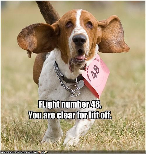 airplane basset hound floppy ears flying - 1779528448