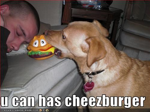 Cheezburger Image 1779871488