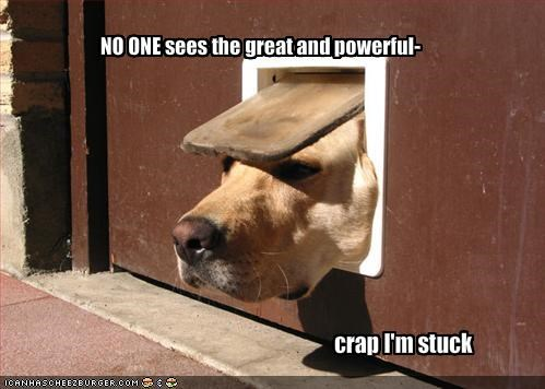 doggie door,door,stuck,trapped,yellow lab