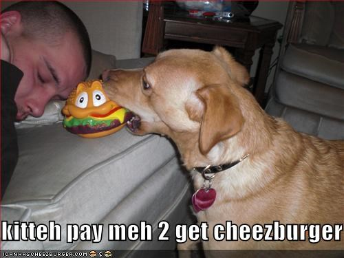 Cheezburger Image 1786173696