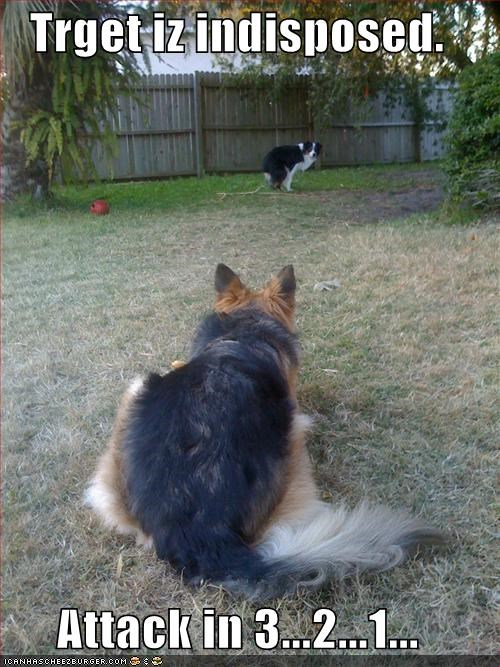 attack border collie outdoors poop yard